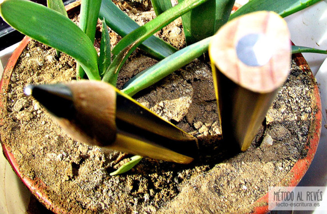 lápices triangulares plantados